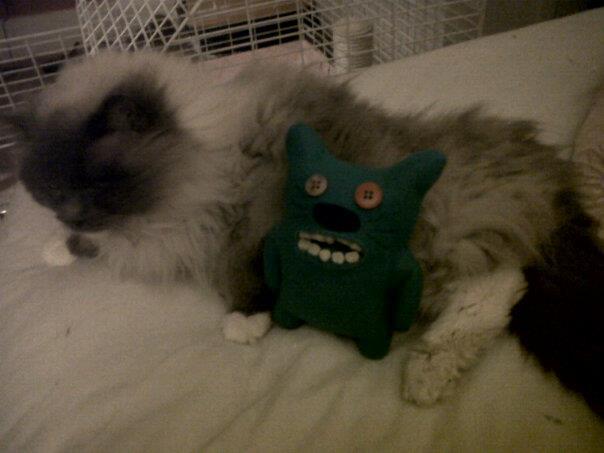 inbred kitten